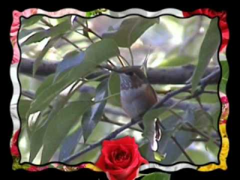 Pishon River Ministries ~ Robyn s Homemade Hummingbird Feeder