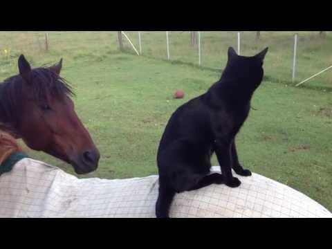 Cat rides a horse