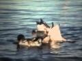 Pelican Lake 1969