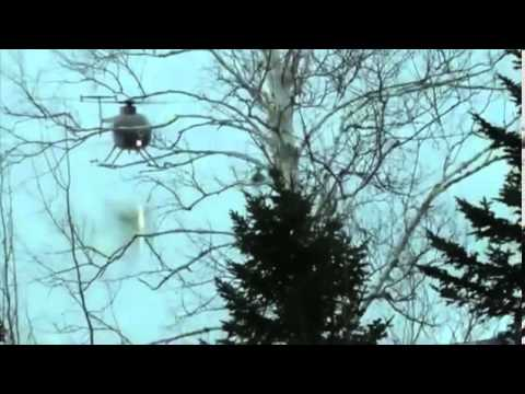 Helicopter gives deer blow job