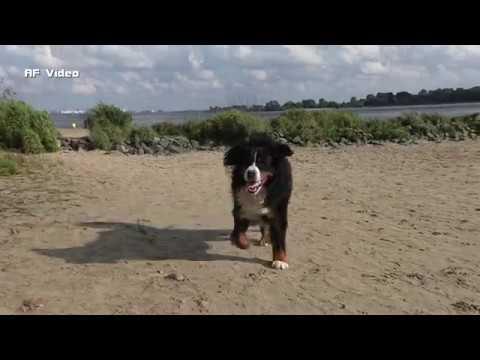 Auch mit Tiere hat man Spass - Fun with animals HD