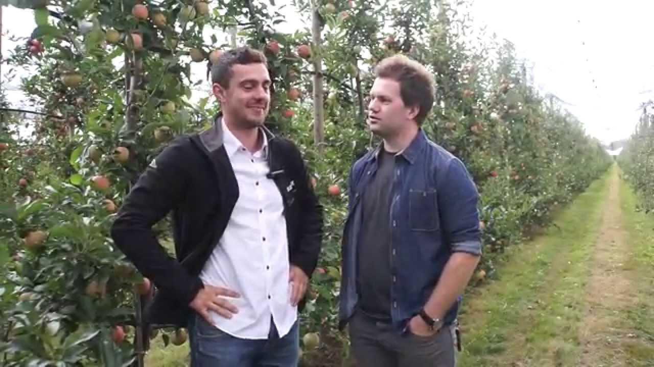 uprawa jabłek, forum sadownicze