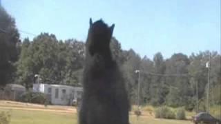 dancing squirrel puppet remix