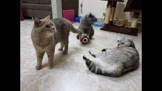 New cat toy :)