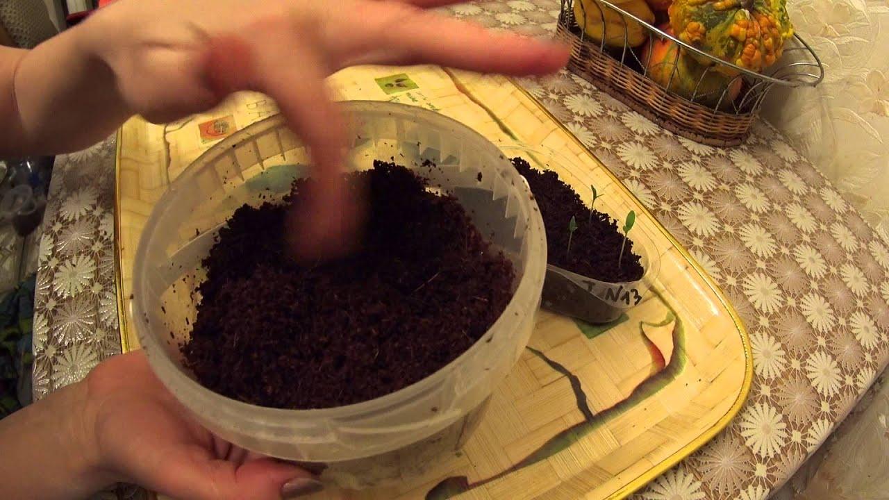 Как выращивать рассаду в торфяных
