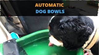 Automatic Dog Bowls: The Best Solution for Your Dogs