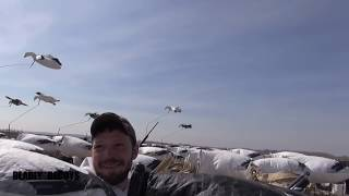 2013 Spring Snow Goose Hunting with Deadly Decoys