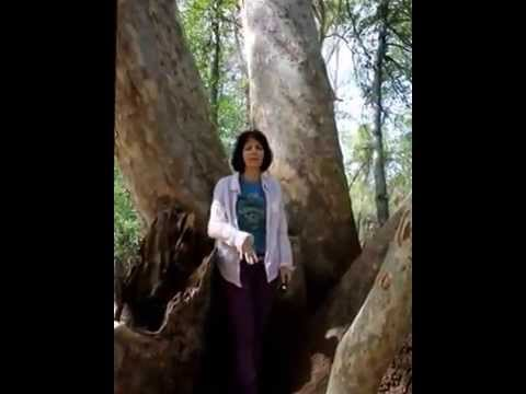 Tara Greene Psychic How to connect with Mother Earth/ Pachamama energy