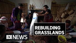 These Burmese refugees are helping rebuild Australian grasslands | ABC News