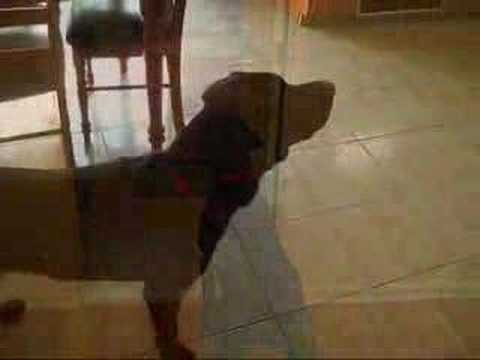 Brownie Dog Barking