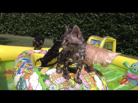 Happy Holiday - Puppies and Kittens at the swimming pool