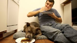 Pitbull vs Owner Taco Eating Challenge