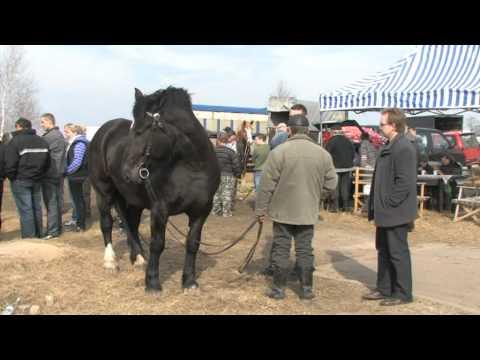 Wstępy - Jarmark Koński, 14-15 marca 2011 Skaryszew k/Radomia
