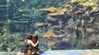 Atlanta Georgia Aquarium World's Largest
