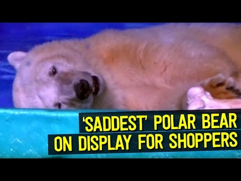 The SADDEST Polar Bear in the World