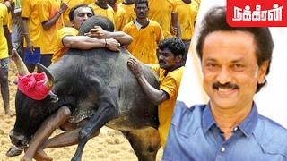 MK Stalin at Madurai Alanganallur Jallikattu 2017