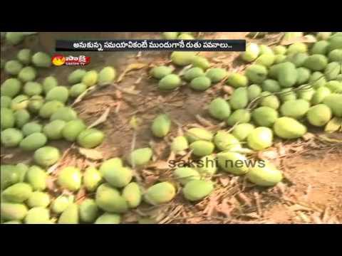 Heavy Rains Hits AP: Many Trees and Crops Damaged