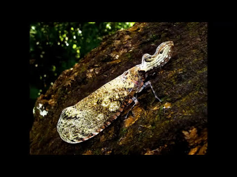 Nuestro Insolito Universo-Insecto Caiman