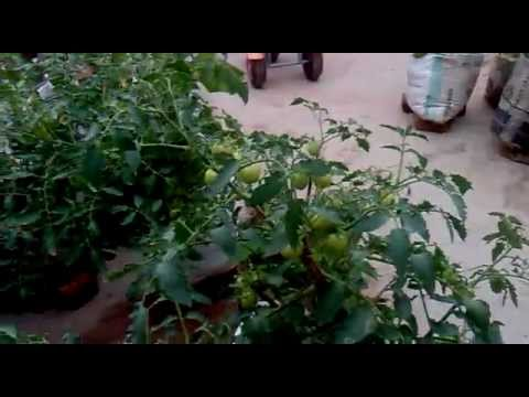 Terrace vegitable garden mattuppavu krishi youtube for Terrace krishi