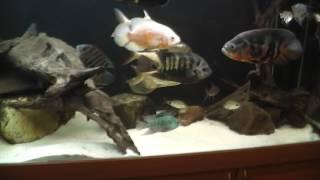 Интерактивный аквариумный туризм Сезон 3 Выпуск 8(Странный аквариум)