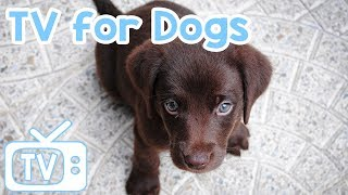 Dog TV Video For dogs: With Relax My Dog Music!