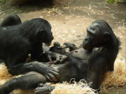 Funny Van Dannen - Bonobo