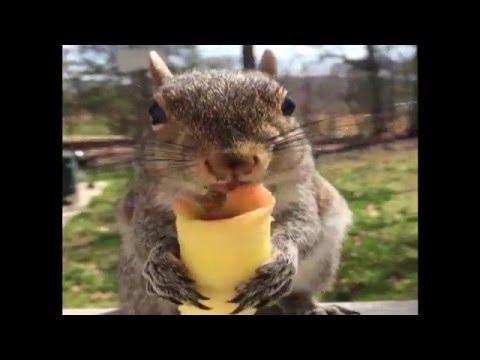 無心でリンゴをむさぼる腹ペコなリス