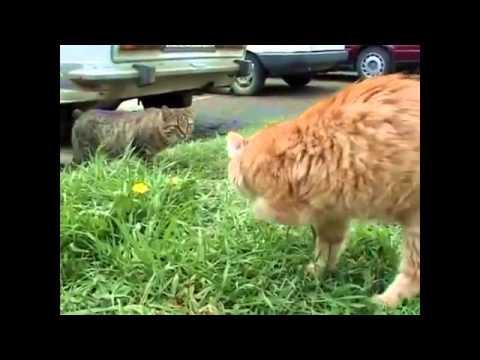 Рыжий кот  Веселая детская песенка