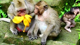 Popeye hungry & eating fruit to scare her son , Pity baby Polly so cool after raining need mom