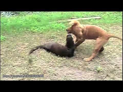 Amigos animais que não se importam com espécie