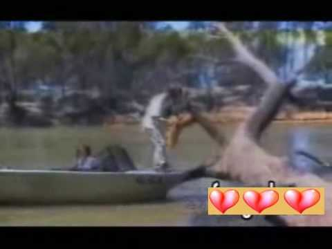 Video clip  Câu cá bị cá câu   SUMOVN COM