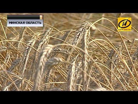 Александр Лукашенко поручил убрать зерно качественно и без потерь