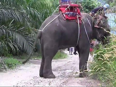 Raw: Tourists Saved After Elephant Kills Handler
