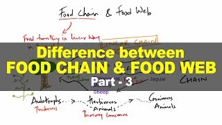 Environment and Ecology for UPSC - Difference between Food Chain & Food Web - Part 3