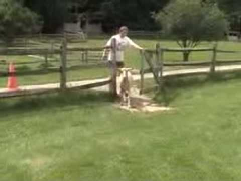 Come learn how to milk a goat at Shelburne Farms, in Shelburne, Vermont!