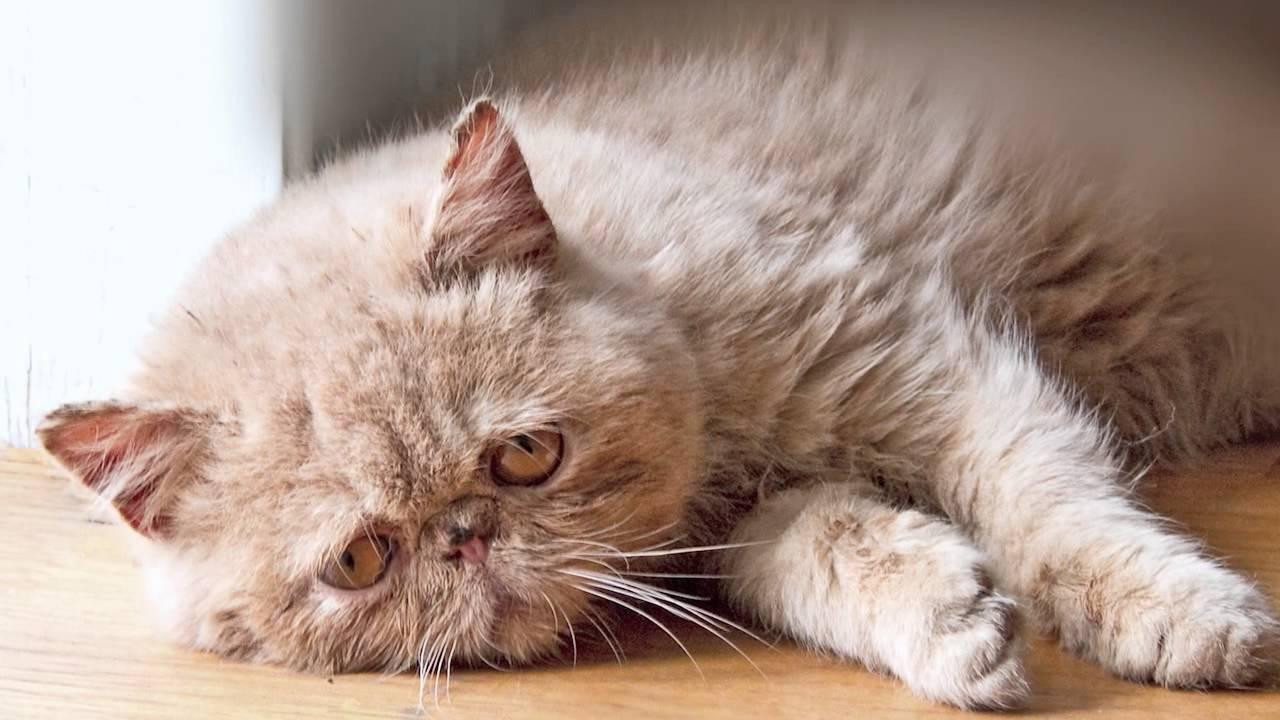 Youtube Sad Cat Diary