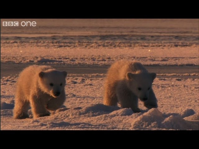 Naughty Corner - Frozen Planet - BBC One