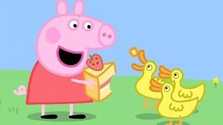 Peppa Pig Nederlands Compilatie Nieuwe Afleveringen 🦆 Picknicken 🍰 Tekenfilm | Peppa de Big