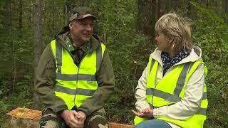 Интенсивное ведение лесного хозяйства.