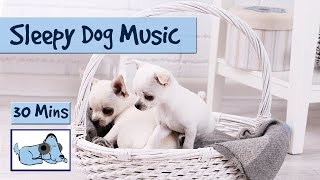 Sleepy Dog Music! Watch Your Dog Fall Asleep to our Music!  from Relax My Dog - Relaxing Music for Dogs
