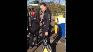 SeaWorld Scuba diving experience