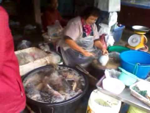 Wiang Pa Pao video