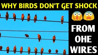 why Birds Don't get Shock From Electric OHE Wire