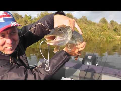 способы рыбалки на кольцо