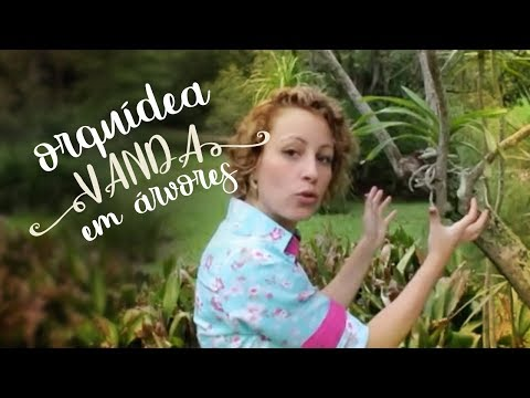Como Cuidar de Orquídeas - Ponha sua Vanda na árvore