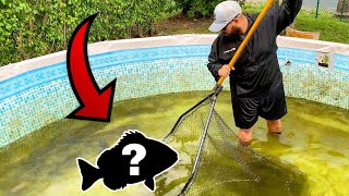 NET FISHING For Pool POND GIANTS!