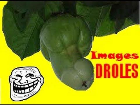 IMAGES DROLES