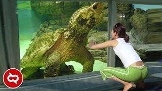 Dikira Sudah Punah, Ternyata Masih ada Sampai Sekarang! 10 Hewan Prasejarah yang Masih Hidup