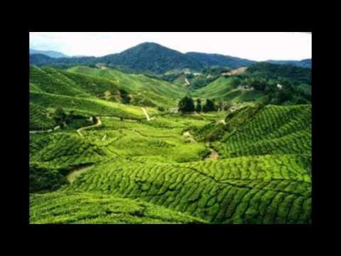 Cameron Highlands- Tourist Attractions in Malaysia