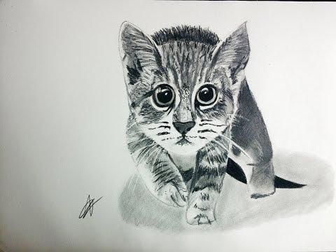 Cómo dibujar un gato realista paso a paso explicado MUY FÁCIL